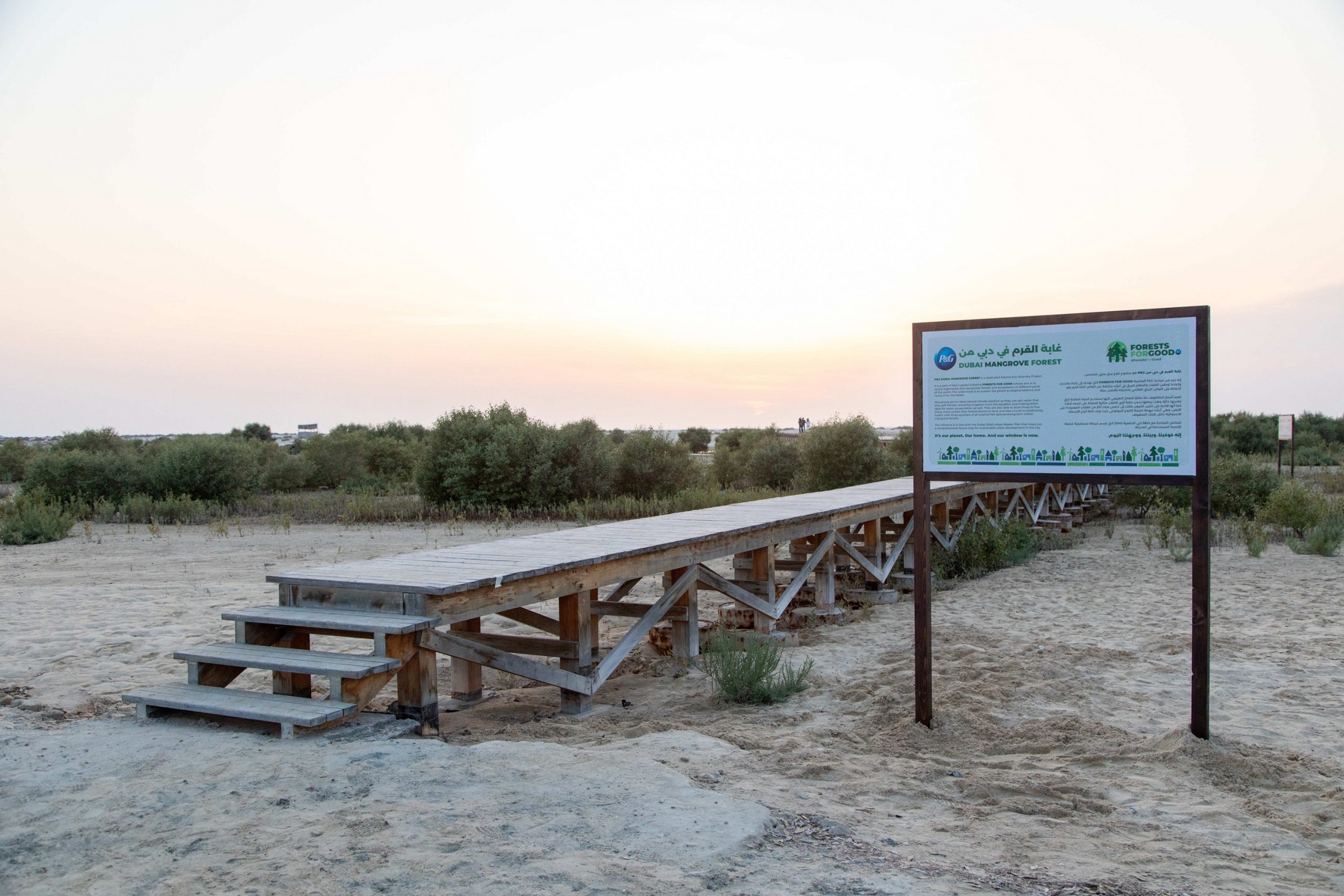 P&G and Carrefour Join Together to Plant 26 Forests in the UAE